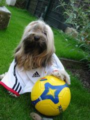 Tibet Terrier Mo Shu Chula dr&uumlckt seine 4 Pfoten f&uumlr das deutsche Team