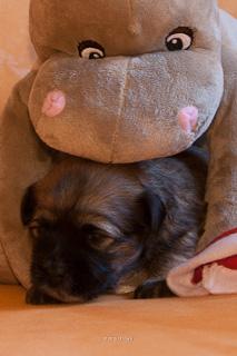 Sunny und Hippo :-).