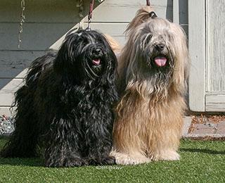 Chirayu Bumo und Wanted Nice Dog�s Fuzu Lamleh (aka Bhodi)