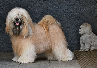 Wanted Nice Dog�s Fuzu Lamleh (aka Bhodi)