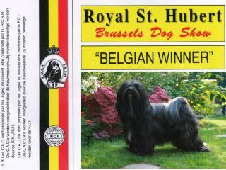 Unsere Tibet Terrier H&uumlndin Karamain Shantara gewinnt bei der Brussels Dog Show 2009 und wird Belgian Winner