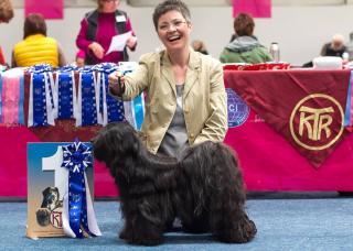 Europasiegerin 2014 - Tibet Terrier H&uumlndin Chirayu Bumo