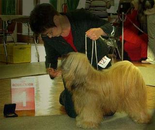Tibet Terrier R&uumlde Mo Shu Chula bei seinem Best In Show Sieg
