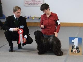 Tibet Terrier H&uumlndin Karamain Shantara gewinnt das BOB in Kassel bei Herrn Habig