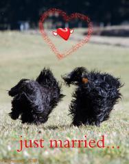 Silgarhi Ernshaw und Chirayu Bumo - Just married