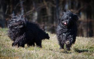 Schwarze Sch&oumlnheiten - Black Beauties