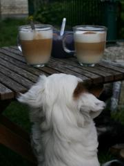 Ich will auch etwas von dem leckeren Milchschaum :-).