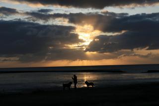 Sonnenuntergang am Meer mit Hunden (Norddeich)