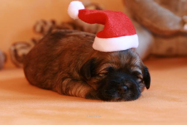 Ho Ho Ho. Nikolaus habe ich zwar verschlafen, aber er hat ein paar Mützen dagelassen.